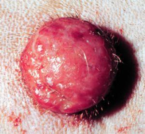 Histiocytoma en perros