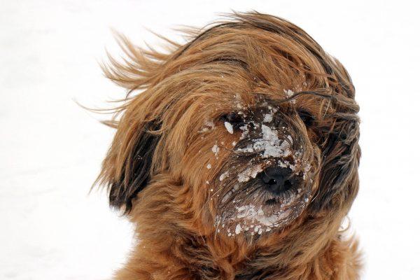 Visión microscópica de las galerias escabadas en la piel del perro