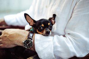 gastritis en perros