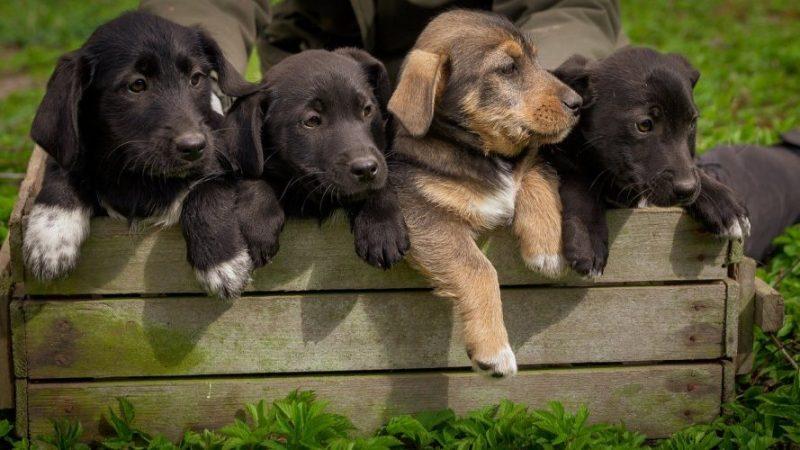 Parvovirosis en perros síntomas y tratamiento - 🧡, ¿que es?