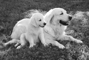 perra y cachorro con parvovirus