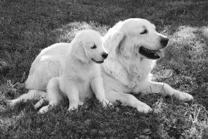 enfermedades más mortales en perros