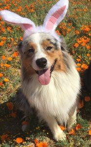 perro con enfermedad neurológica