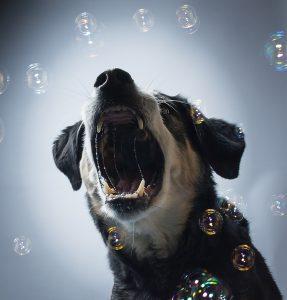 perro con neumonía