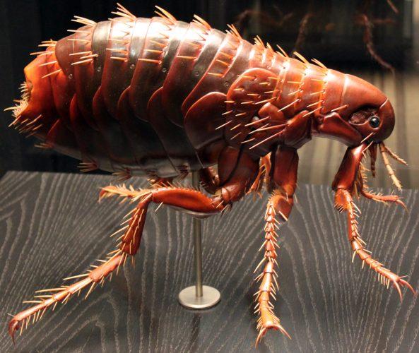 Cómo eliminar pulgas en perros y casa - 🧡 síntomas, que hacer