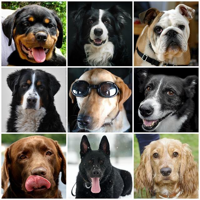 Enfermedades articulares y de los huesos en perros