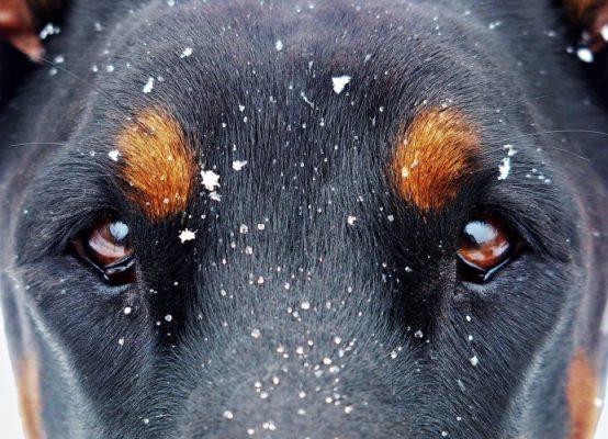 Neumonía Perros causas, síntomas, tratamiento: 🧡 prevención