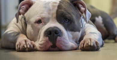 arritmia cardiaca en perros