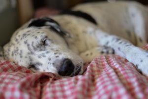enfermedades de la piel en perros imagenes, enfermedades de la piel en perros, enfermedades de los ojos en perros, enfermedades de la boca en perros, enfermedades digestivas en perros, enfermedades en perros viejos, enfermedades en la boca en perros, enfermedades en perros pdf, enfermedades de perros chihuahua en la piel, enfermedades de la piel en perros chihuahua, enfermedades de la vista en perros, enfermedades en perros rottweiler, perros con enfermedades en la piel, enfermedades autoinmunes en perros, enfermedades de la lengua en perros, enfermedades en los testiculos de los perros, enfermedades bacterianas en perros, enfermedades virales en perros, enfermedades en perros sintomas, cuales son las enfermedades mas comunes en los perros, enfermedades geneticas en perros, enfermedades graves en perros, enfermedades en perros cachorros, enfermedades en los perros y sus sintomas, enfermedades en perros adultos, enfermedades frecuentes en perros, enfermedades en las orejas delos perros, enfermedades mortales en perros, enfermedades respiratorias en perros tratamiento, caida de pelo en perros enfermedades, enfermedades en perros chihuahua, enfermedades del estomago en perros, enfermedades infecciosas en perros, principales enfermedades en perros, enfermedades parasitarias en perros, enfermedades comunes en perros chihuahua, enfermedades nerviosas en perros, enfermedades musculares en perros, enfermedades mas comunes en perros y gatos, enfermedades del higado en perros, enfermedades a la piel en perros, enfermedades y medicamentos en los perros,