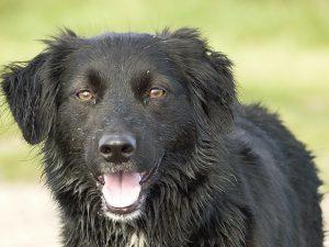 bronquitis en perros