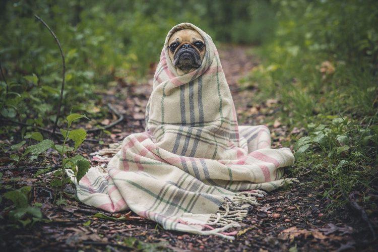 Causas y síntomas de bronquitis de bronquios en perros: 🧡, cura