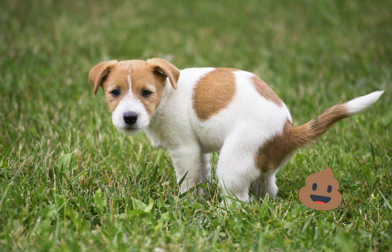 Causas de Diarrea  Amarilla en Perros.  🧡 Tratamiento