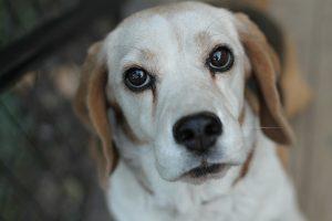 causas de diarrea amarilla en perros