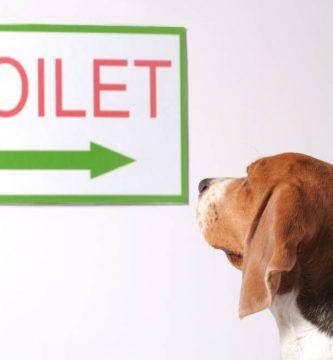 diarrea negra en perros
