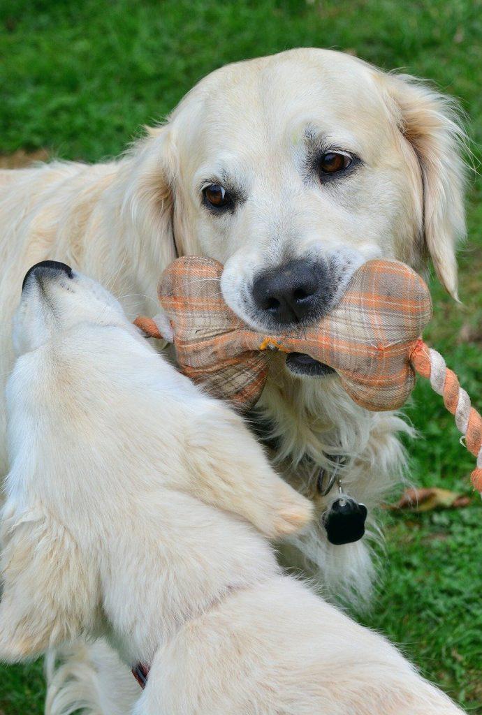 disfagia en perros
