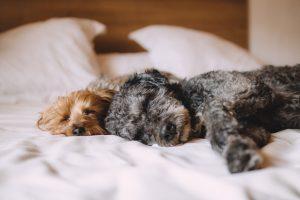 enfermedades virales en perros