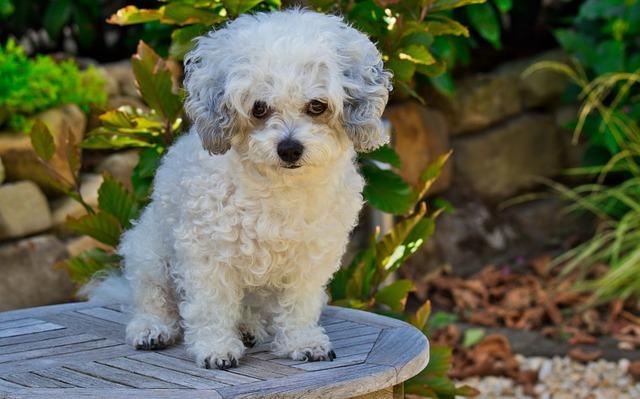 insuficiencia renal aguda en perros