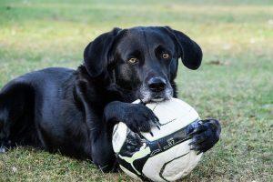 megaesofago en perros