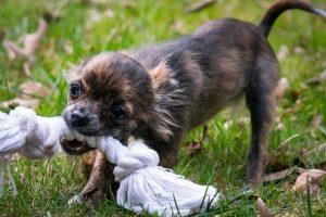 obstrucción esofágica en perros