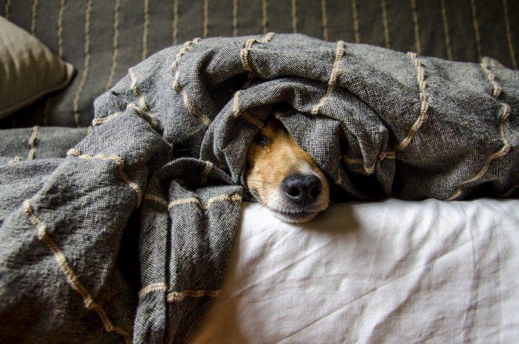 Tipos de parásitos externos en perros -  🧡, cachorros y adultos