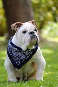 regurgitación en perros, regurjitar, significado de regurgitar, vomito por la nariz, que es la regurgitación, regurgitación,  definición regurgitar