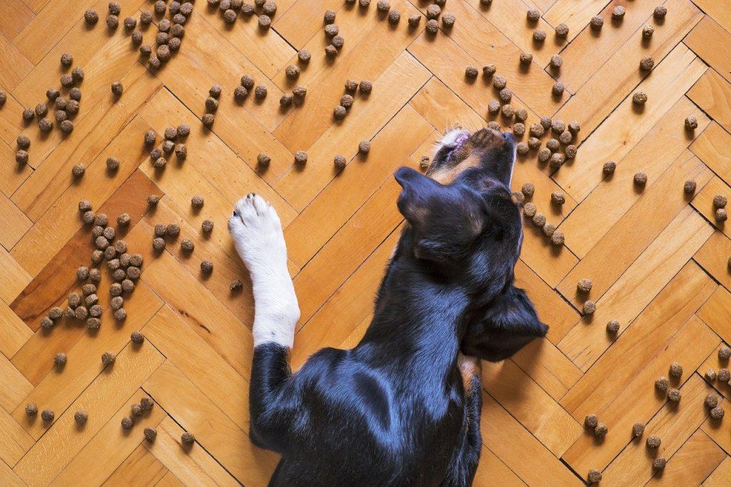 regurgitacion en perros
