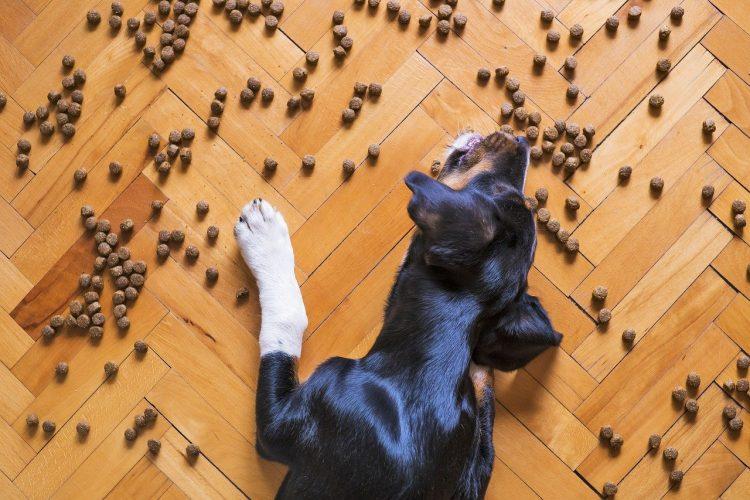 Regurgitación en perros - 🧡, Perro vomita comida sin digerir