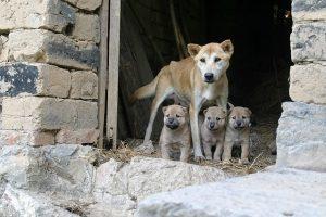 tos de las perreras