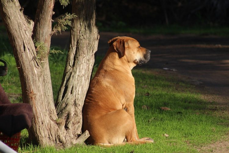 Como tratar a un perro con problemas neurológicos solución: 🧡