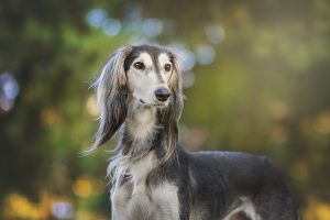 la sarna en perros es contagiosa