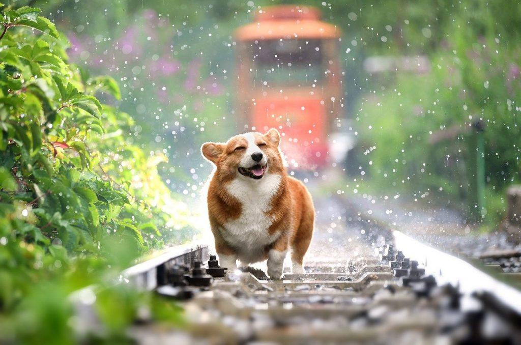 leishmaniasis en perros vacuna