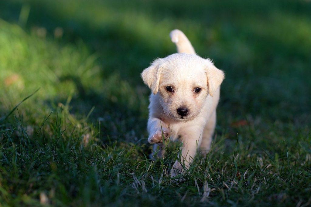 parvovirus y parvovirosis en perros vacunados