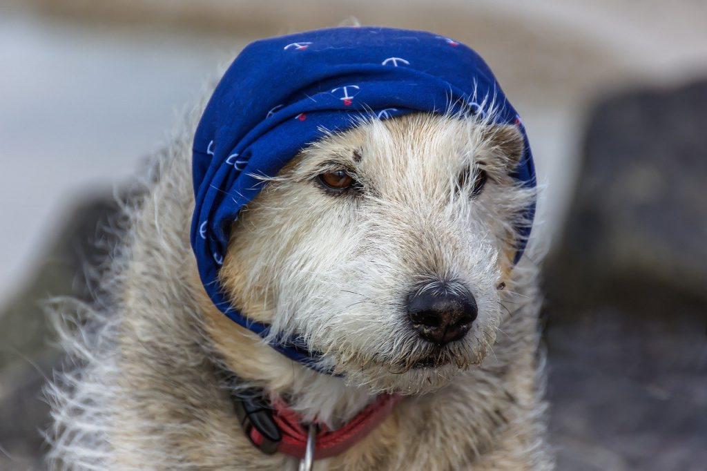 leishmaniasis cutánea en perros