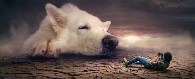 ¿Moquillo en Perros como se contagia? - 🧡, a gatos, humanos
