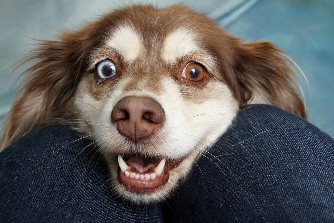 Significado y síntomas del Nistagmo en perros - 🧡 Tratamiento