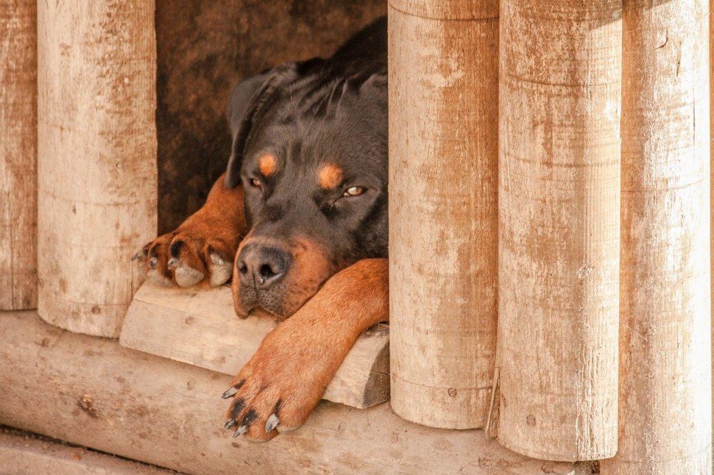 perro durmiendo en la puerta de su caseta