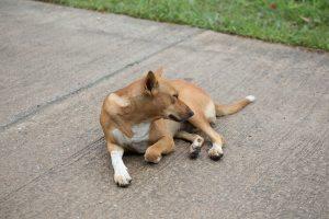 perro en el suelo