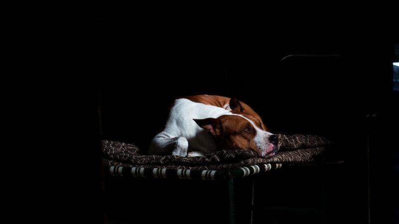 perro tumbado en manta